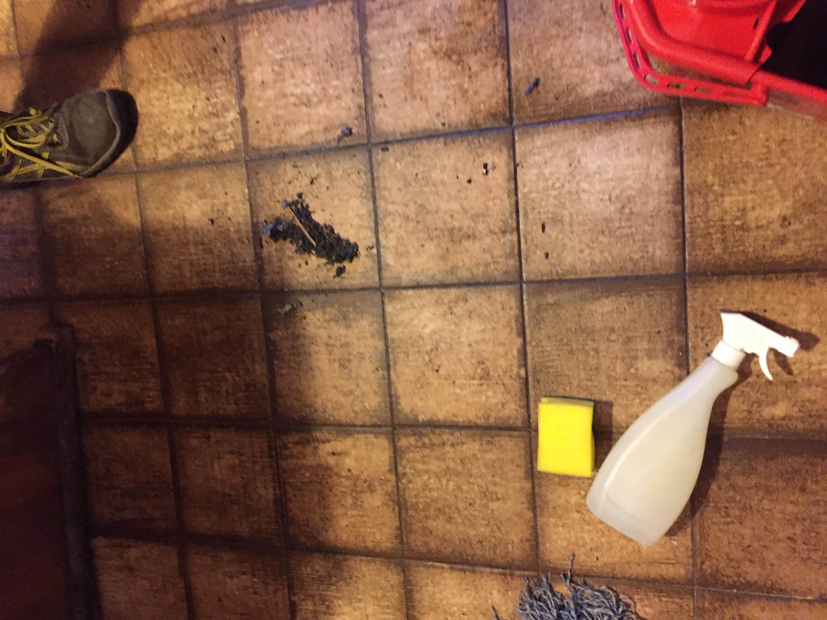 pulizia-lavaggio-pavimenti