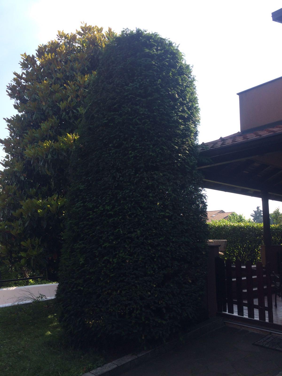 taglio alberi monza