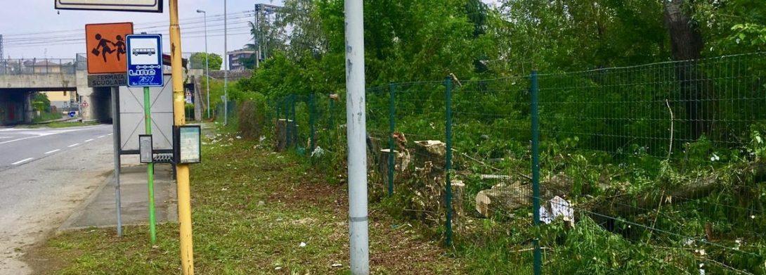 Giardinaggio: Potatura alberi e siepi in zona Milano